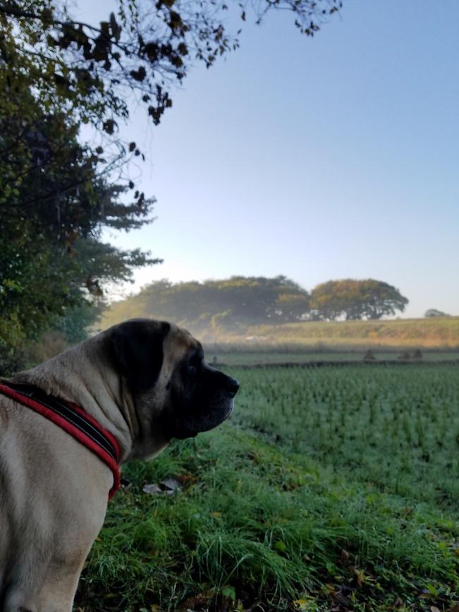 朝散歩のススメ。