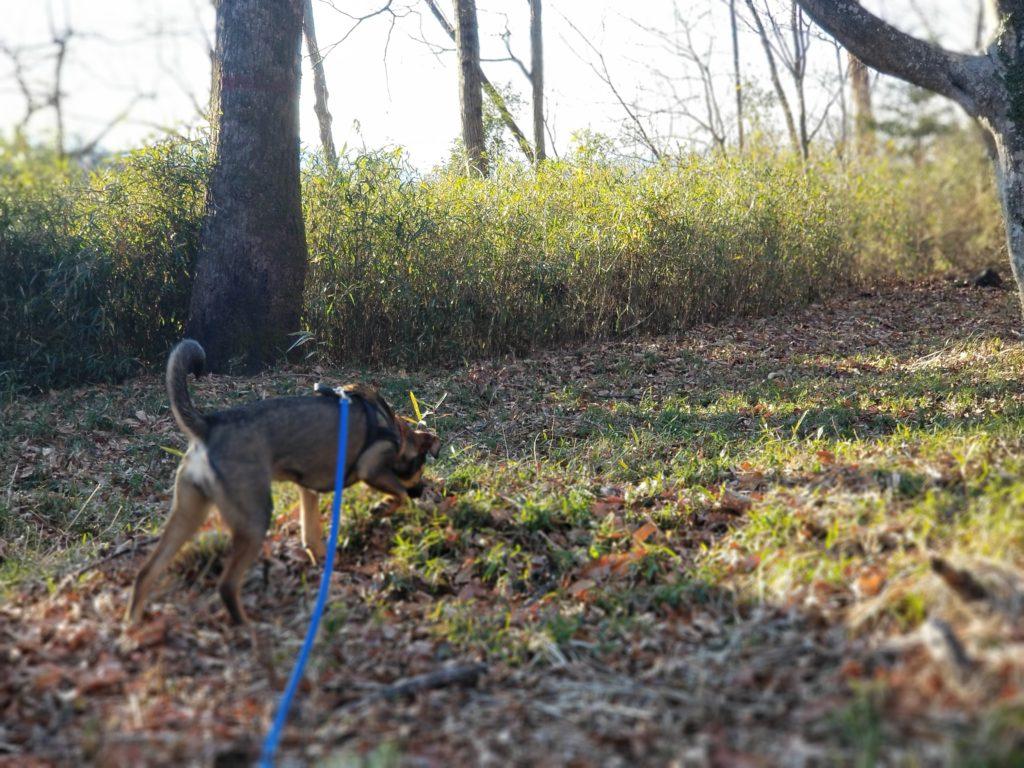 犬との散歩の楽しみ方。