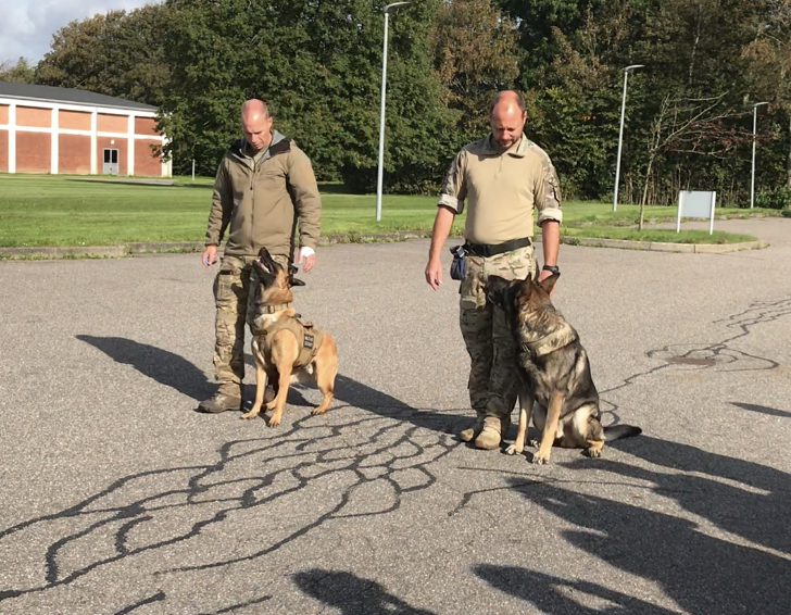 右がフェロー君、左がボス君。2頭並んでも犬達はそれぞれのハンドラーさんしか眼中にありません。