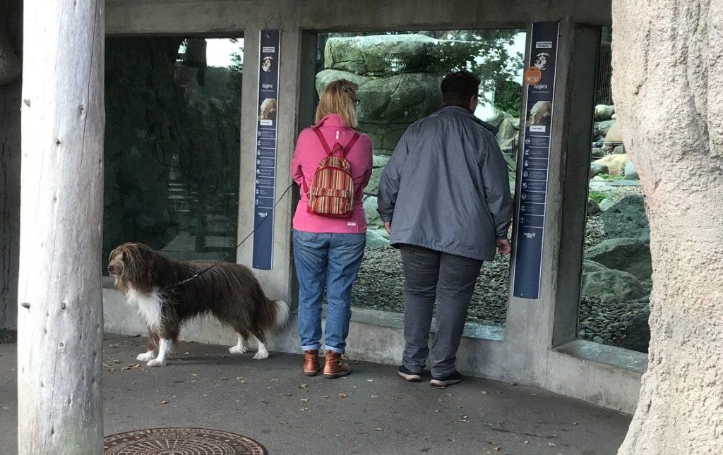 ホッキョクグマの展示前で、とっても素敵な大型のMIX犬を発見!